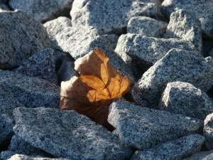 leaf-62464_640